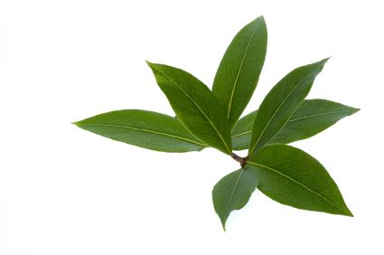 bay_leaves